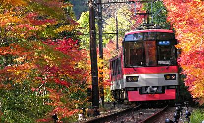 京都の紅葉 叡山電車 もみじのトンネル