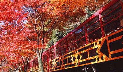 トロッコ列車から観る紅葉